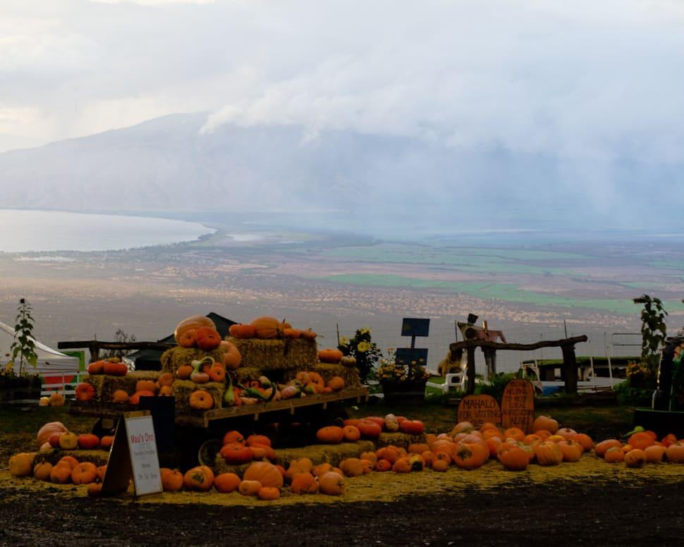 Great Pumpkin Festival in Hawaii - Best Season