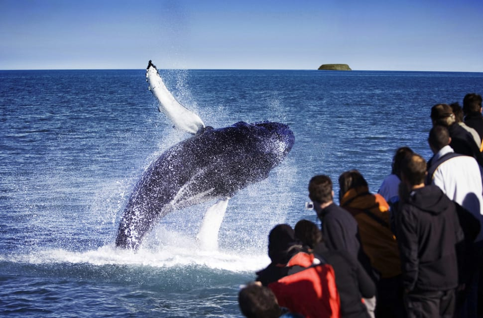 Whale Watching in Iceland - Best Time