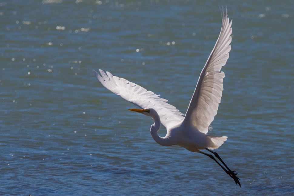 The White Heron Sanctuary Tours in New Zealand - Best Season