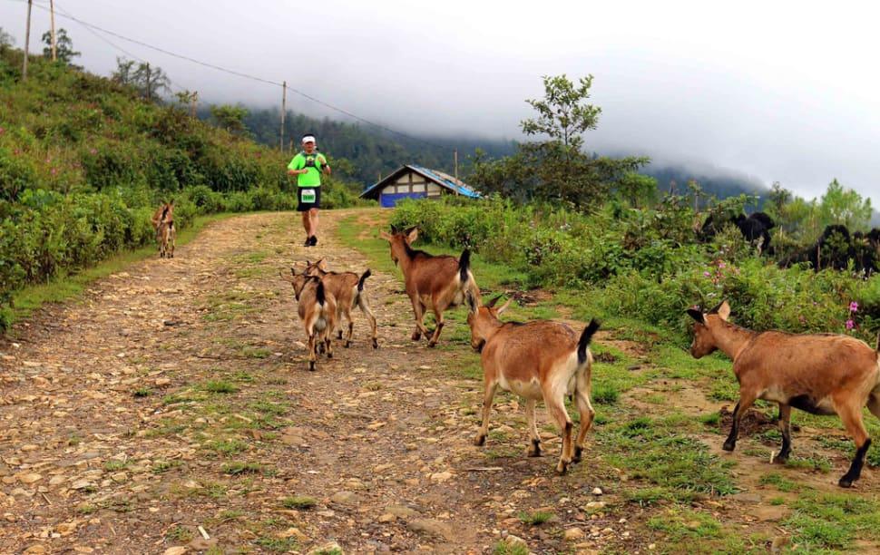 Vietnam Mountain Marathon in Vietnam - Best Season