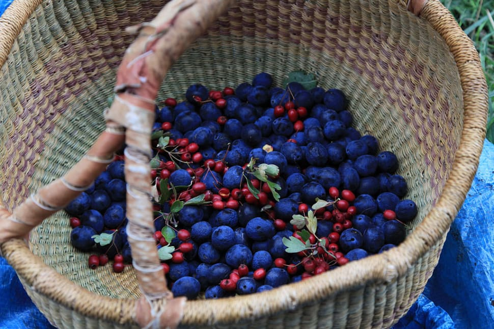 Berry Season in England - Best Time