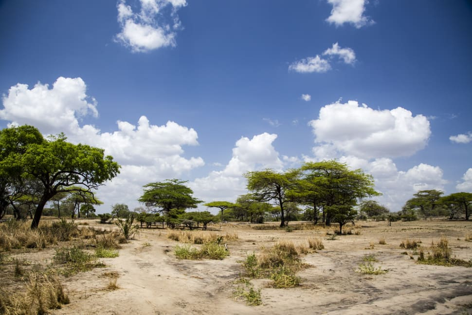 Short Dry Season in Tanzania - Best Time