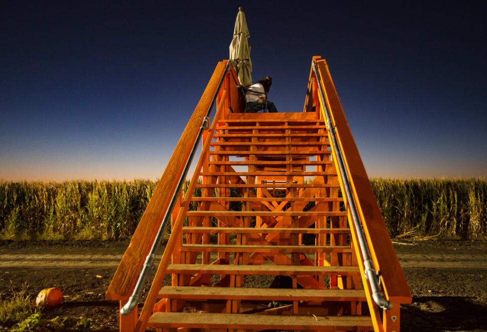 Best time for Cool Patch Pumpkins Corn Maze in California