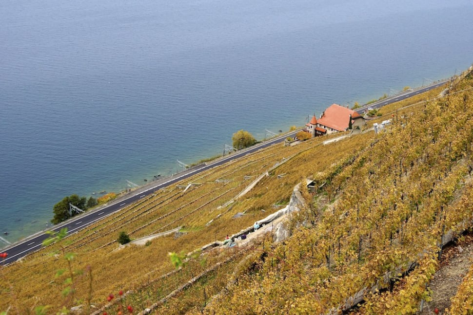 Grape Harvest and Wine Season in Switzerland - Best Time