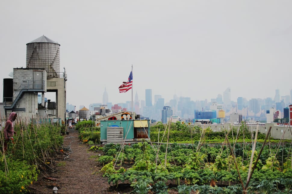 Things to do in New York : Rooftop Gardens and Farms
