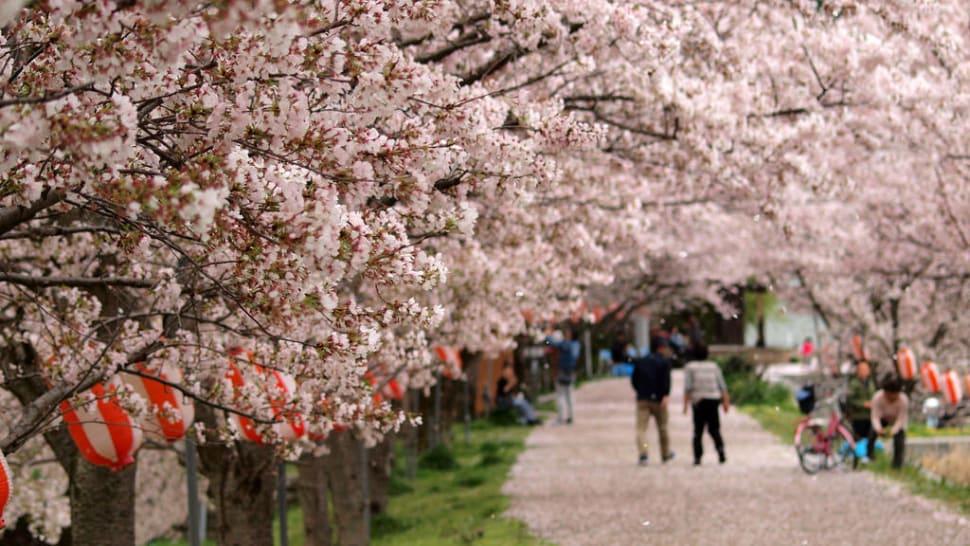 Spring in Japan - Best Time