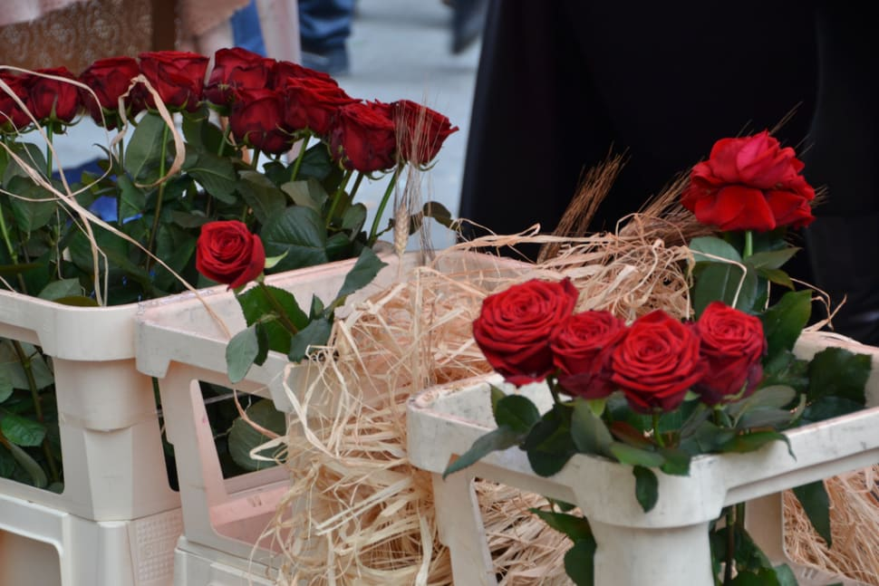 Dia de Sant Jordi in Barcelona - Best Season