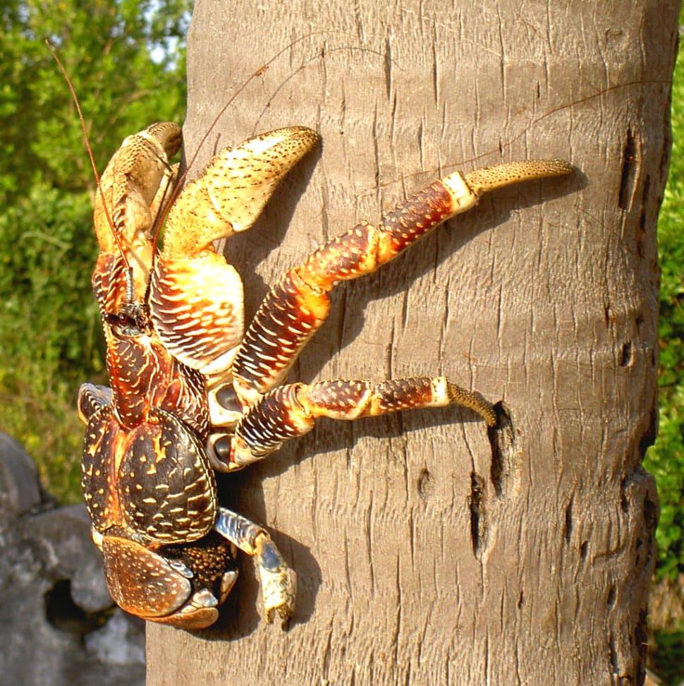 Coconut Crabs on Chumbe Island in Zanzibar - Best Time