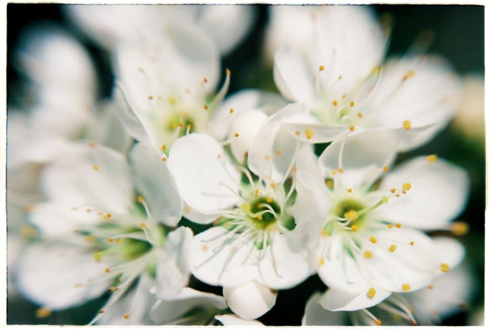 Plum Blossom Season in Vietnam - Best Time