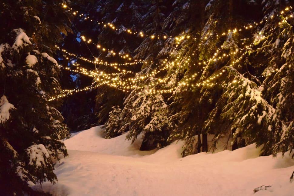 Grouse Mountain Light Walk in Vancouver - Best Season