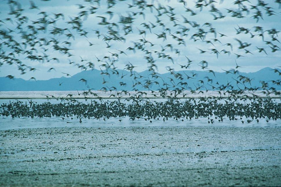Birdwatching in New Zealand - Best Time