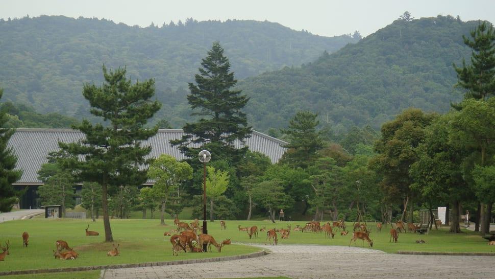 Baby Deer at Nara Park in Japan - Best Season