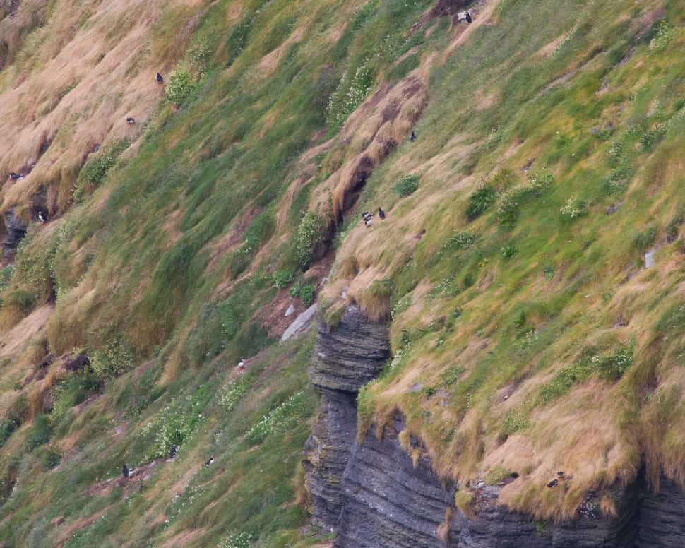 Best time for Watching Puffins in Ireland