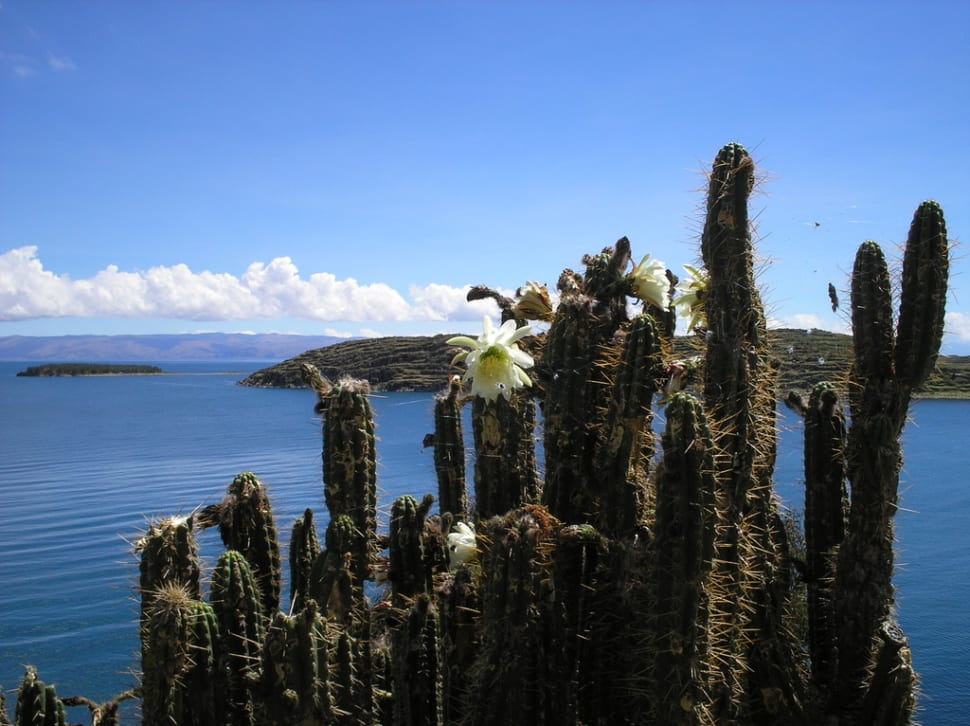 Best time to see Blooming Cacti in Bolivia