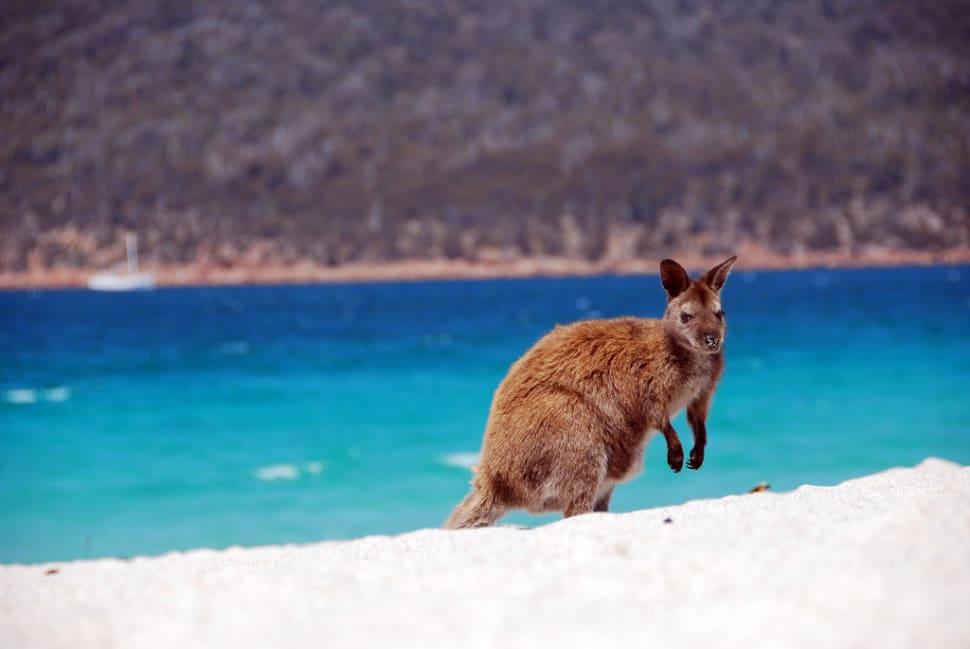 Tasmanian Beach Season in Tasmania - Best Time