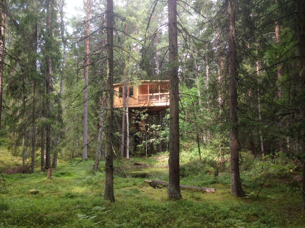 Tree House Hotel in Sweden - Best Time