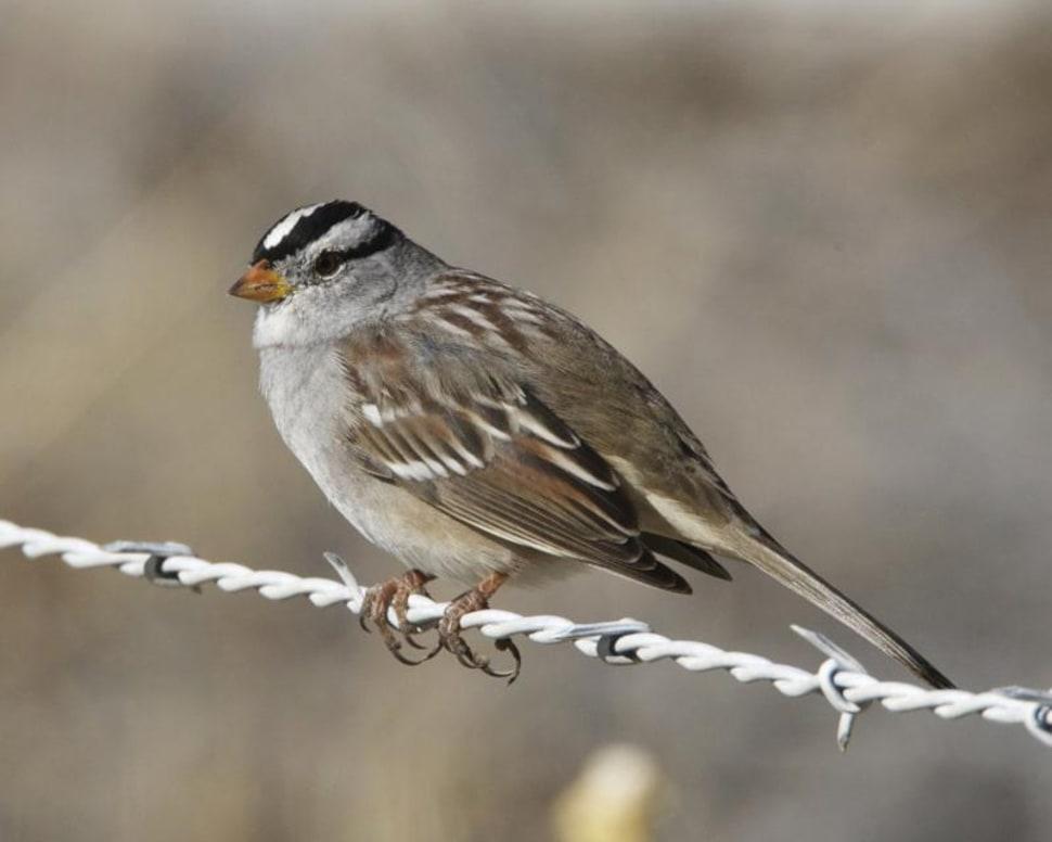 Birdwatching in Corn Creek in Nevada - Best Time