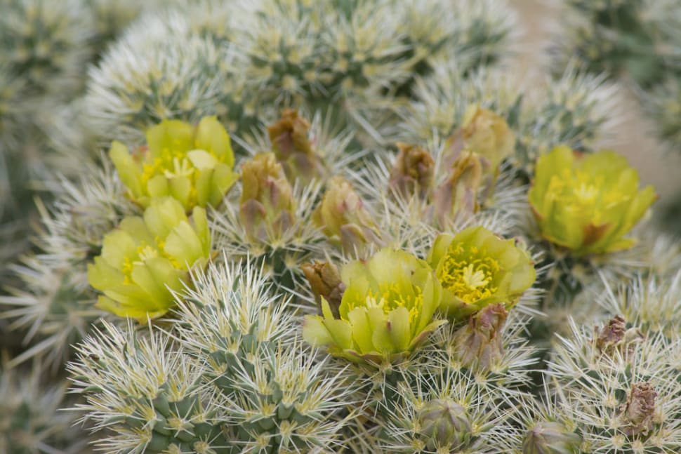Best time for Cactus Blooming in Los Angeles