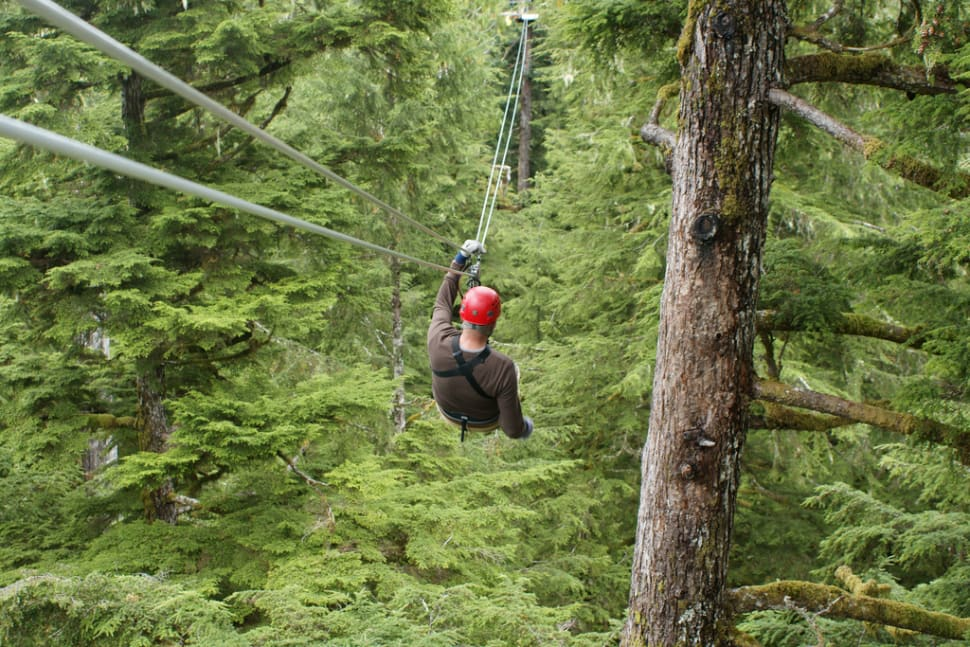 Rainforest Ziplining in Alaska - Best Time
