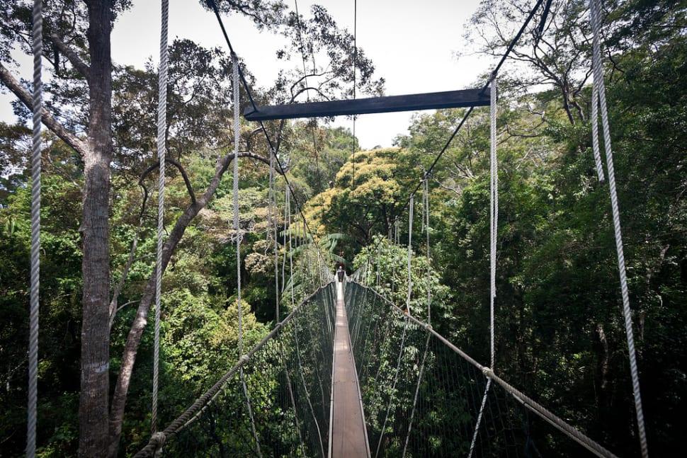Canopy Walks in Peninsular Malaysia in Malaysia - Best Time