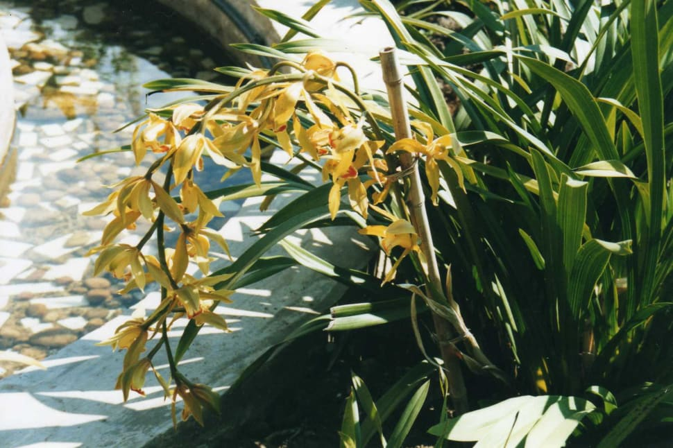 Orchids Spotting in Madagascar - Best Season