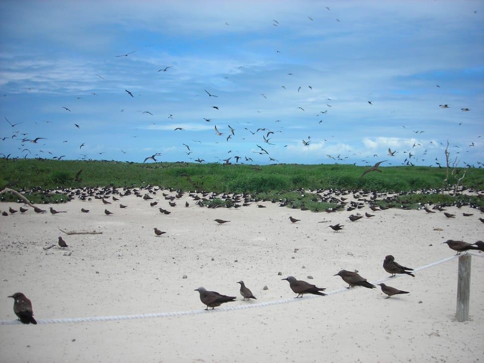 Thousands of birds swarm around