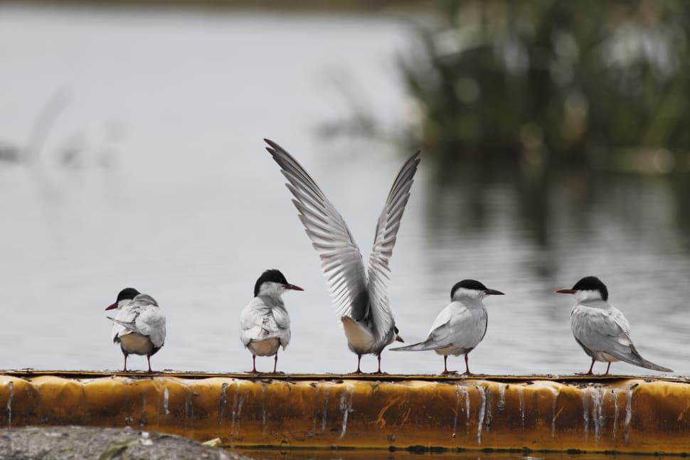 Birdwatching in Victoria - Best Time