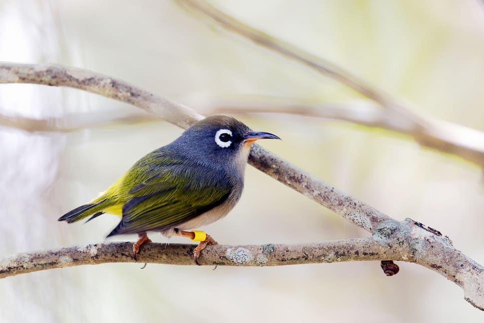 Birdwatching in Mauritius - Best Time