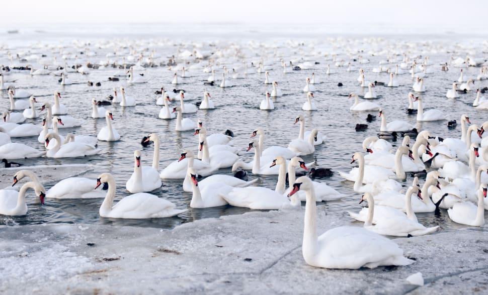 Birdwatching during Mass Bird Migration in Estonia - Best Time