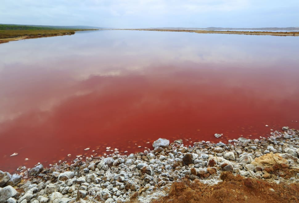 Best time to see Hutt Lagoon in Western Australia