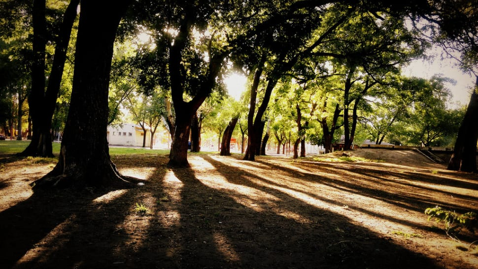 Parks in Summer in Buenos Aires - Best Season