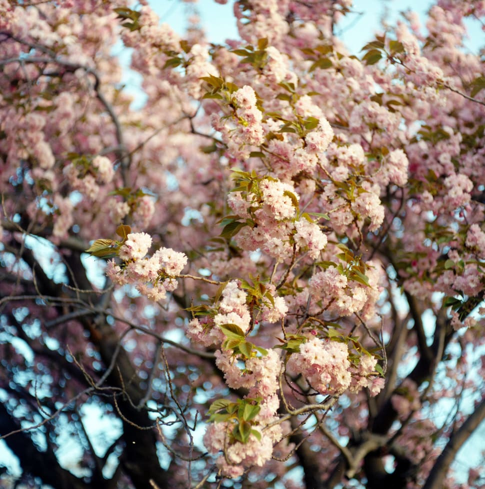 Best time to see Spring Blooms in Boston