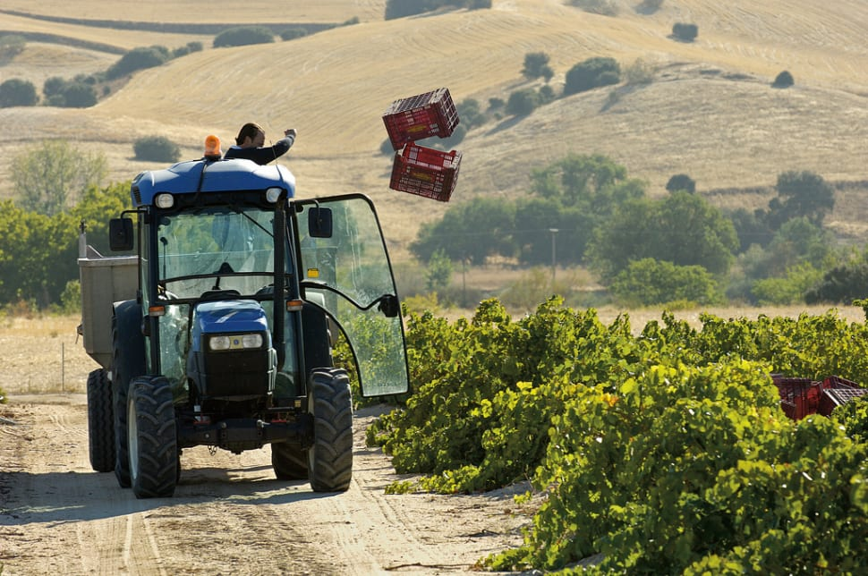 Grape Harvest in Madrid - Best Season
