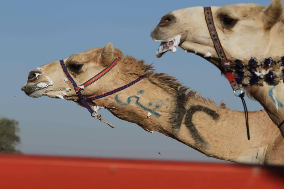Al Marmoom Heritage Festival in Dubai - Best Season