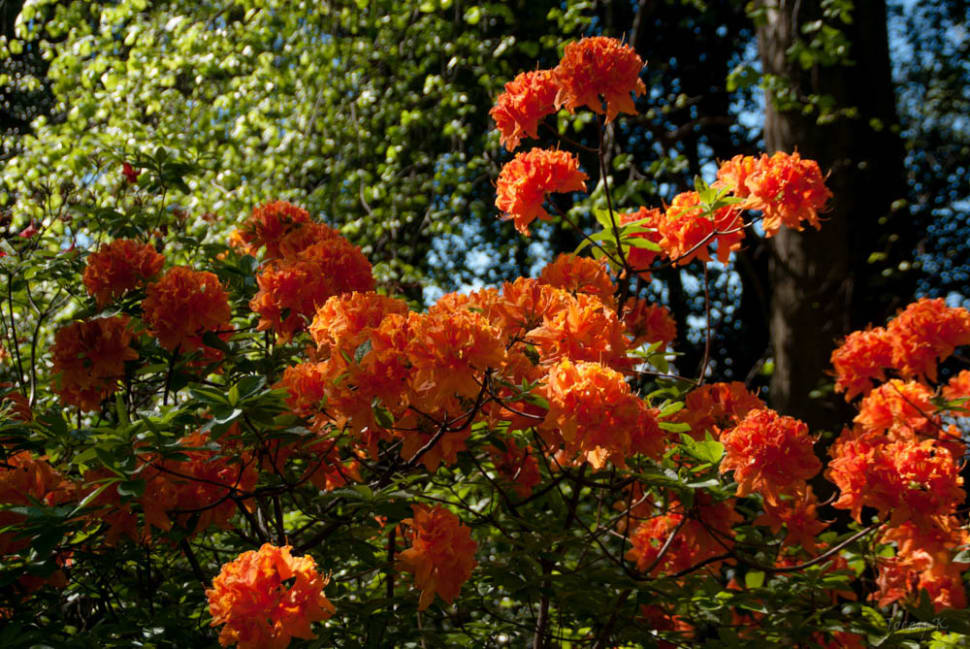 Lovely Bright Orange Blooms