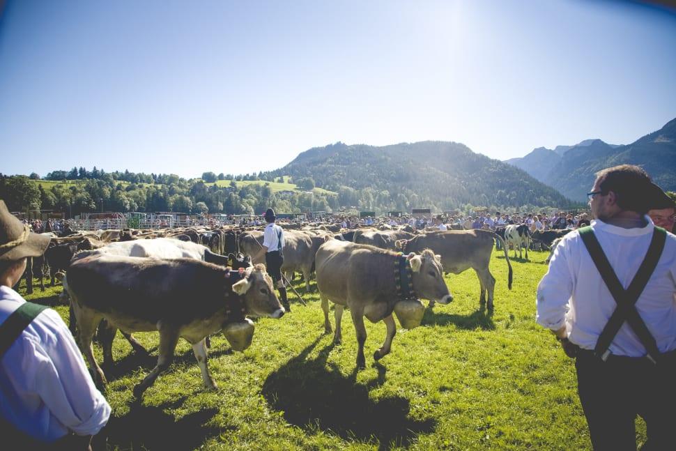 Best time to see Viehscheid in Bavaria