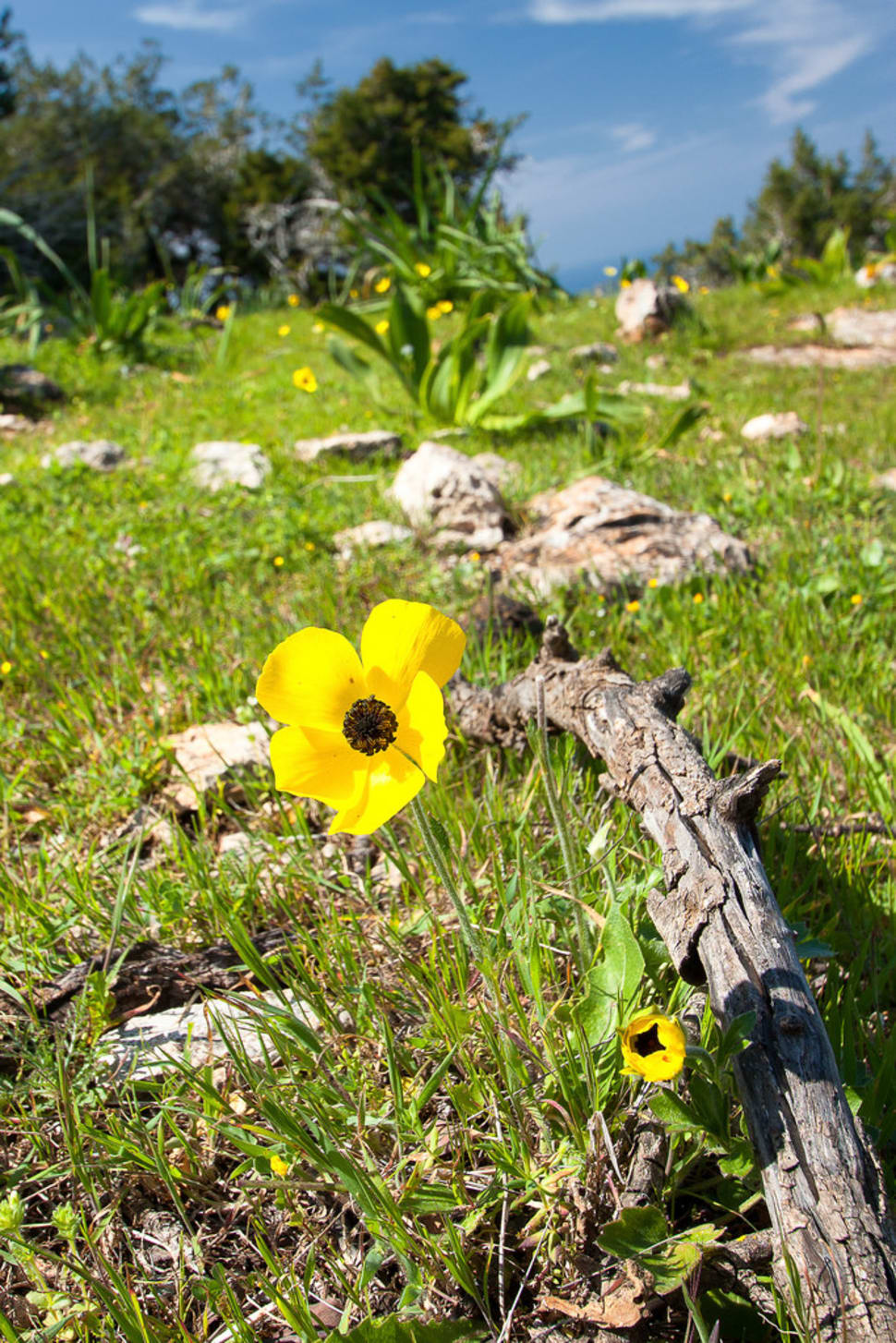Best time for Aphrodite Trail Abloom