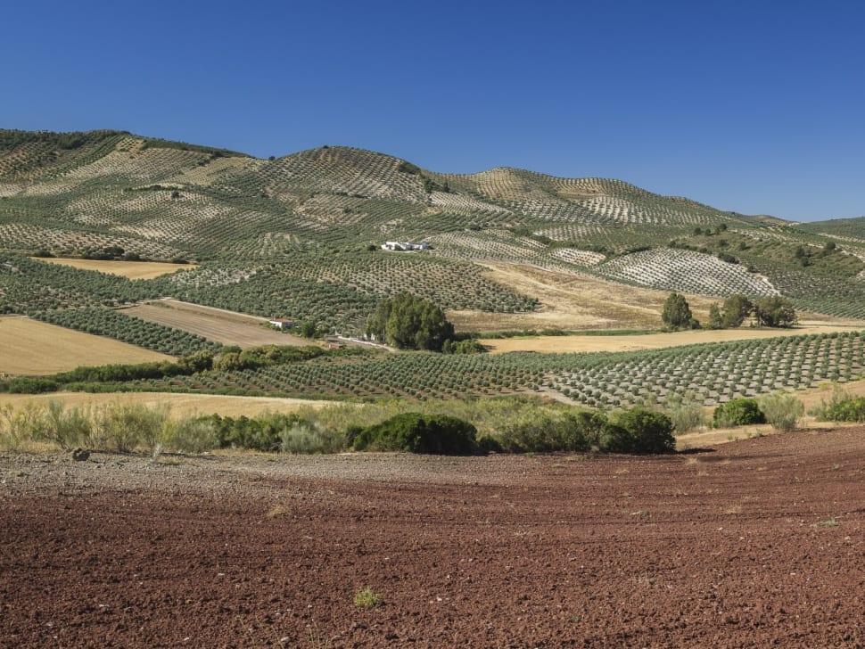 Olive Harvest and Olive Oil in Seville - Best Season