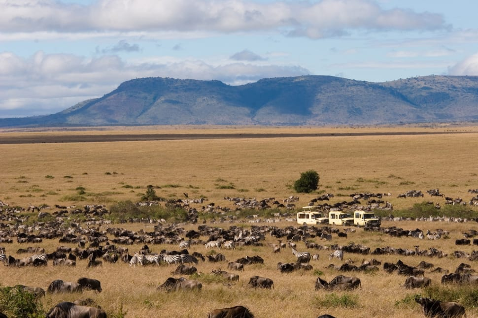 Wildebeest Migration at Mara Game Reserve, Kenya