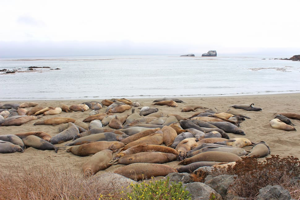 Best time to see Elephant Seal Watching