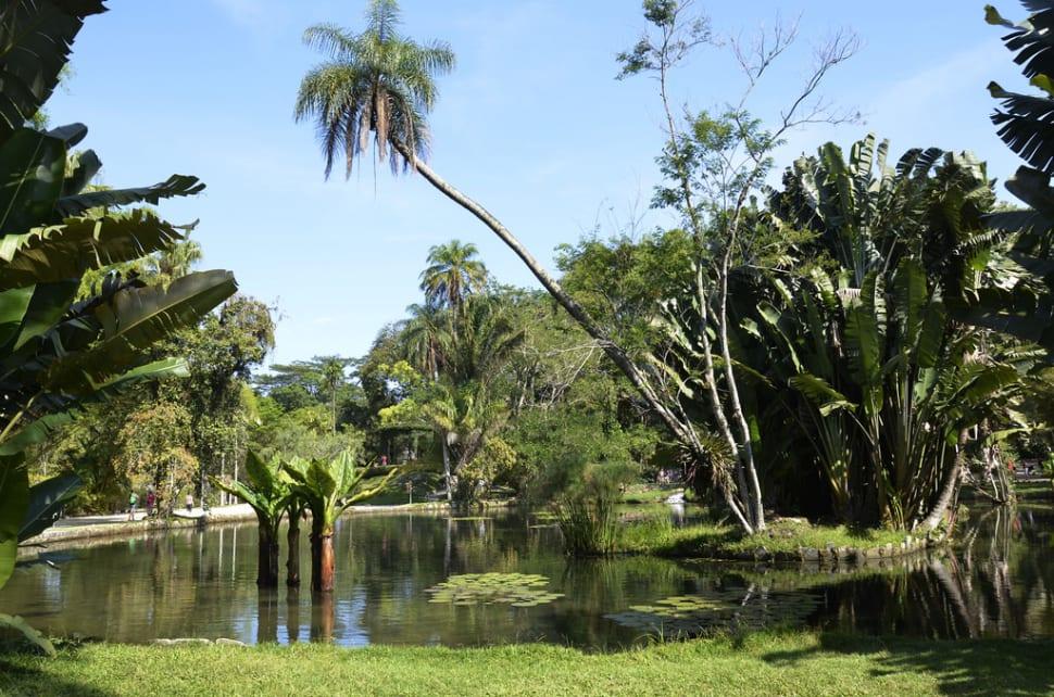 Botanical Garden or Jardim Botânico in Rio de Janeiro - Best Time