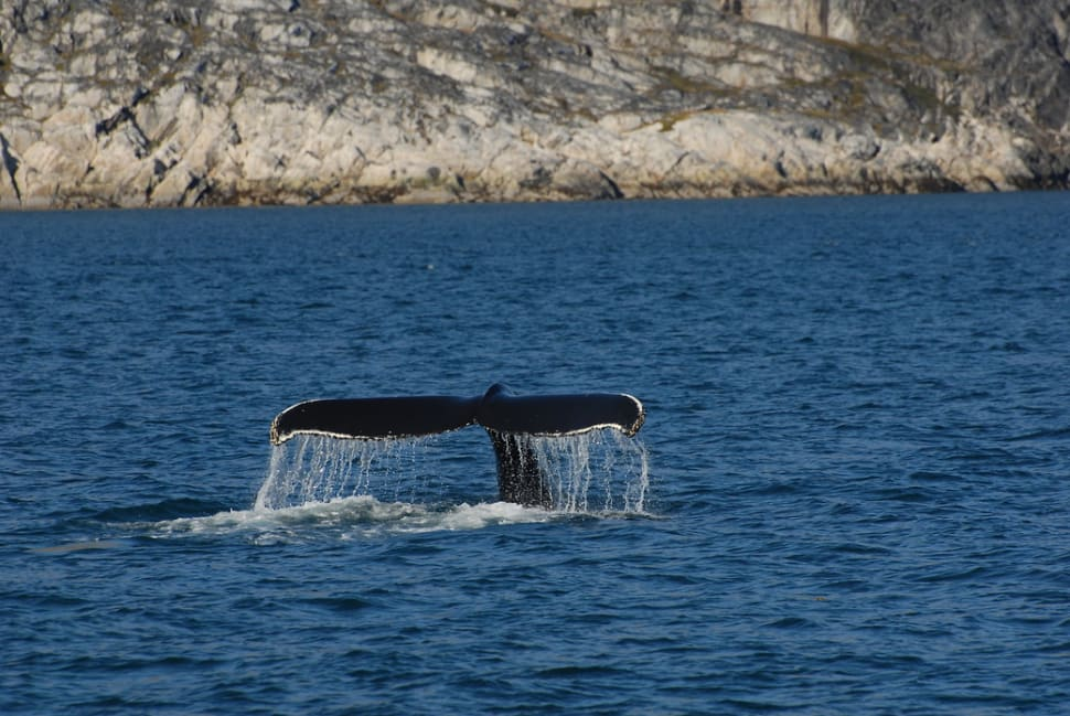 Best time to see Whale Watching in Greenland