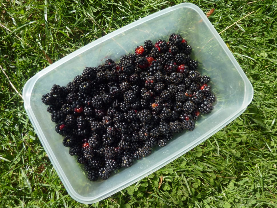 Box of blackberries