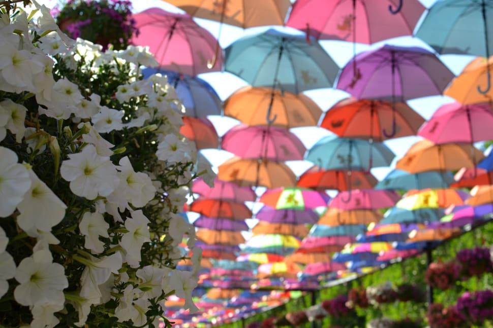 Dubai Miracle Garden in Dubai - Best Time