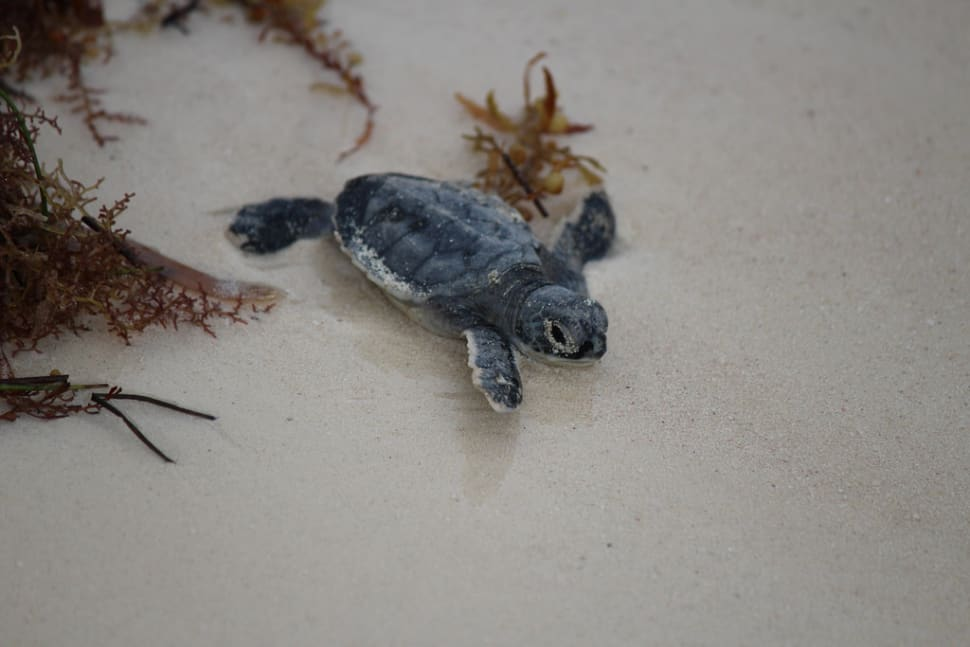 Turtle Nesting and Hatching in Cancun - Best Time