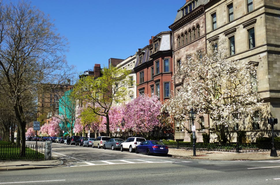Best time for Spring Blooms in Boston
