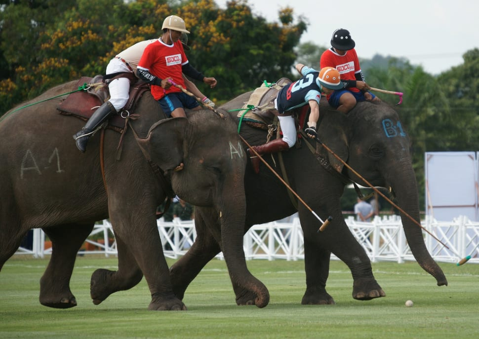 King's Cup Elephant Polo in Thailand - Best Time