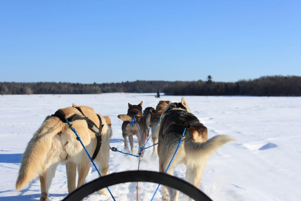 Dog Sledding in Quebec - Best Time