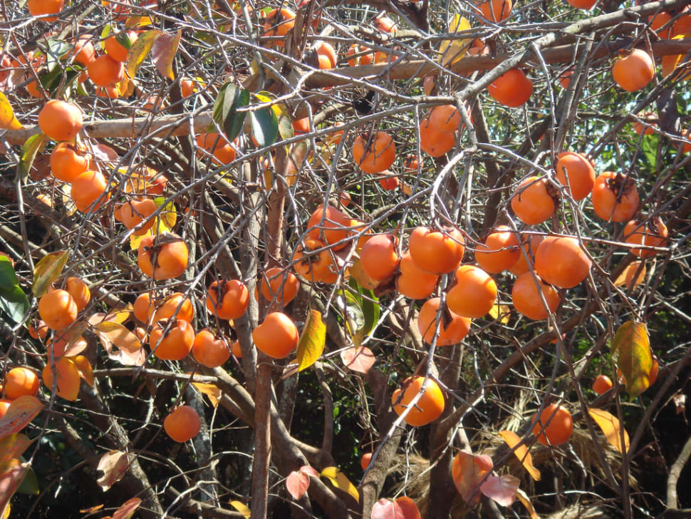 Exotic Fruits Season in Madagascar - Best Time