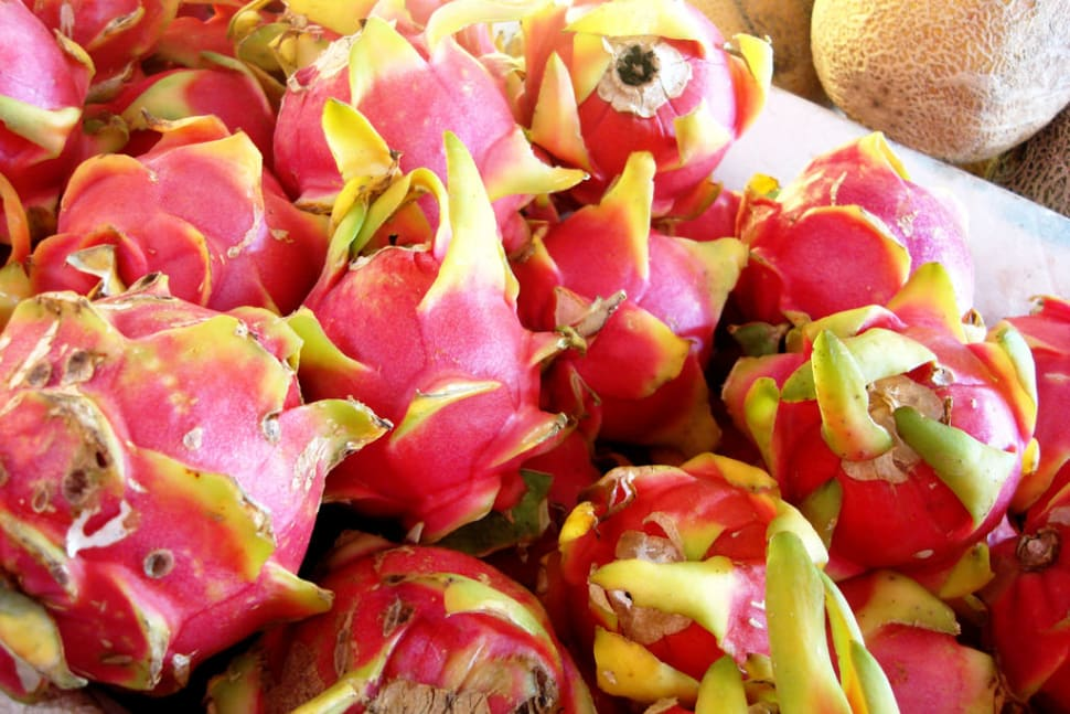 Dragon Fruit or Pitaya   in Mexico - Best Time